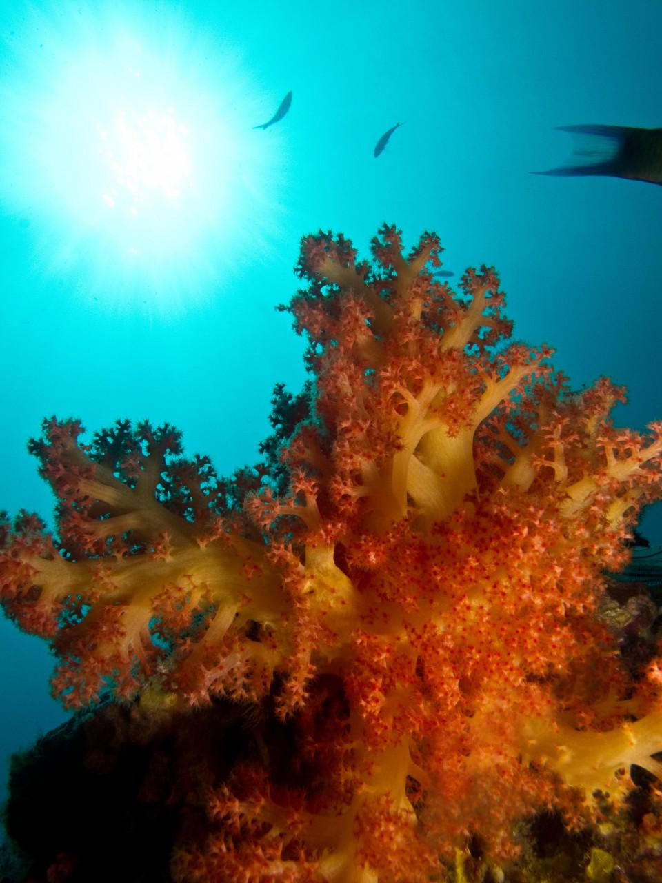 Blog Bild 4 Korallenaufzucht