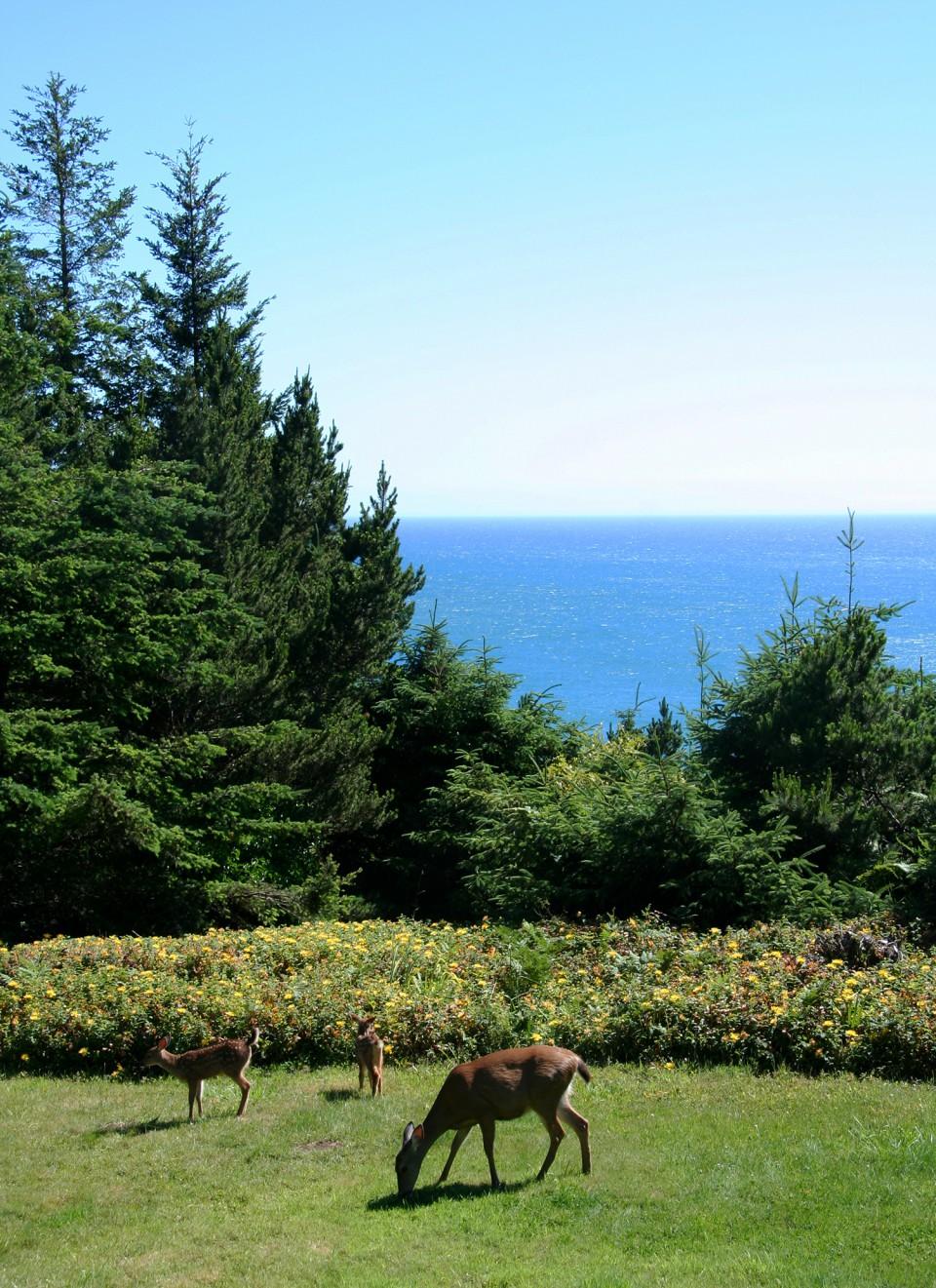 7_Deer by the ocean at WildSpring