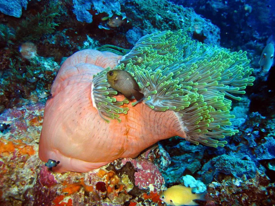 Unterwasser bunt1