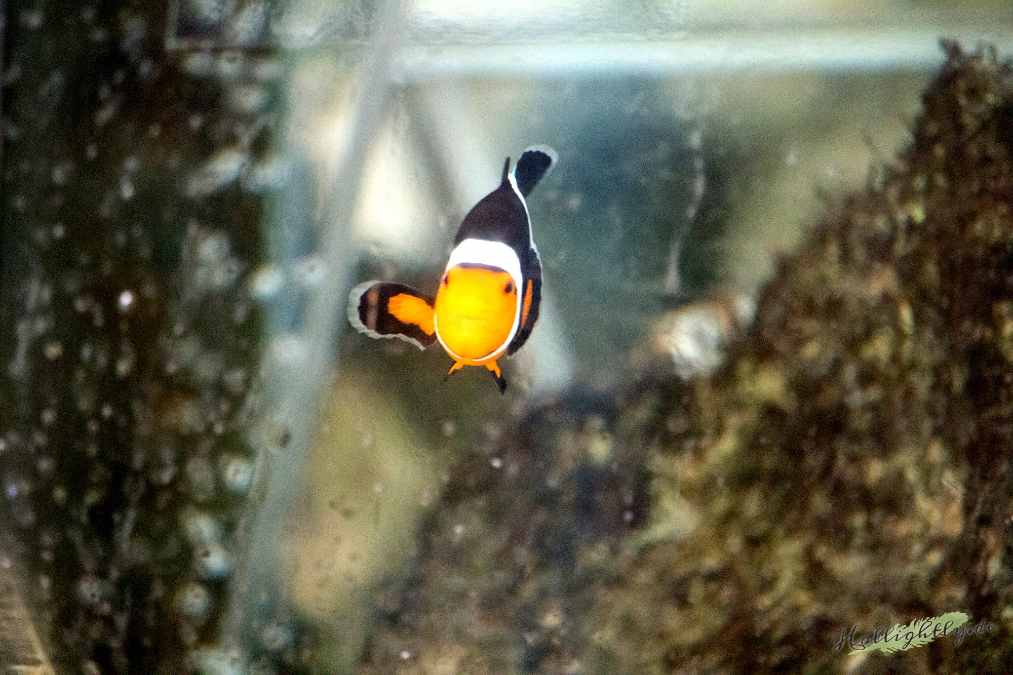Find Nemo at one of the sustainable projects of Green Pearls' hotels.