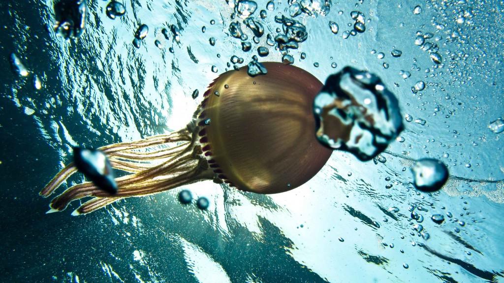 jellyfish3(4)