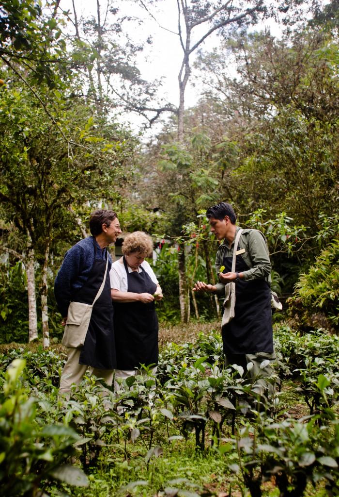Inkaterra Teeplantage