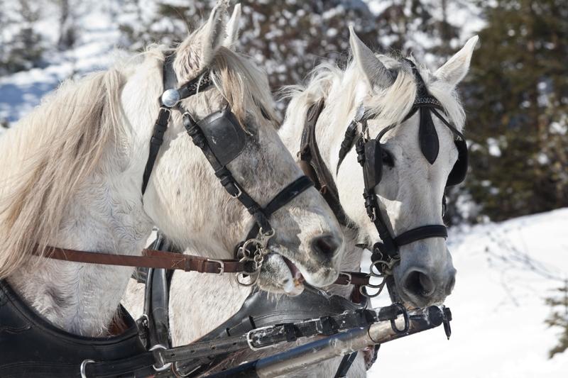 a-pferde-winter-urlaub
