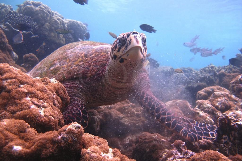 pic-7-chloealways-posing-at-coco-bodu-hithi-house-reef