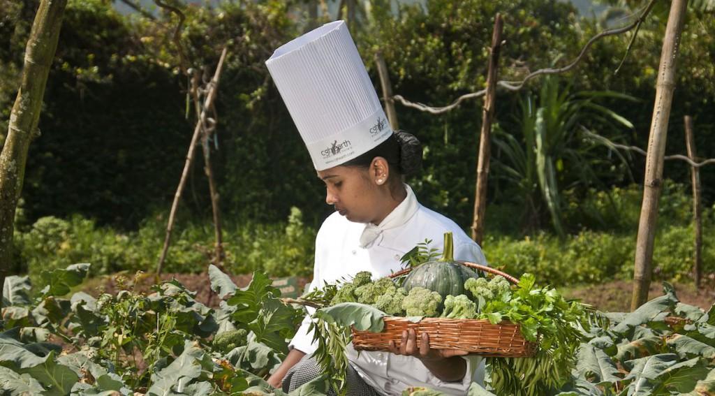 spicevillage-organic-farm