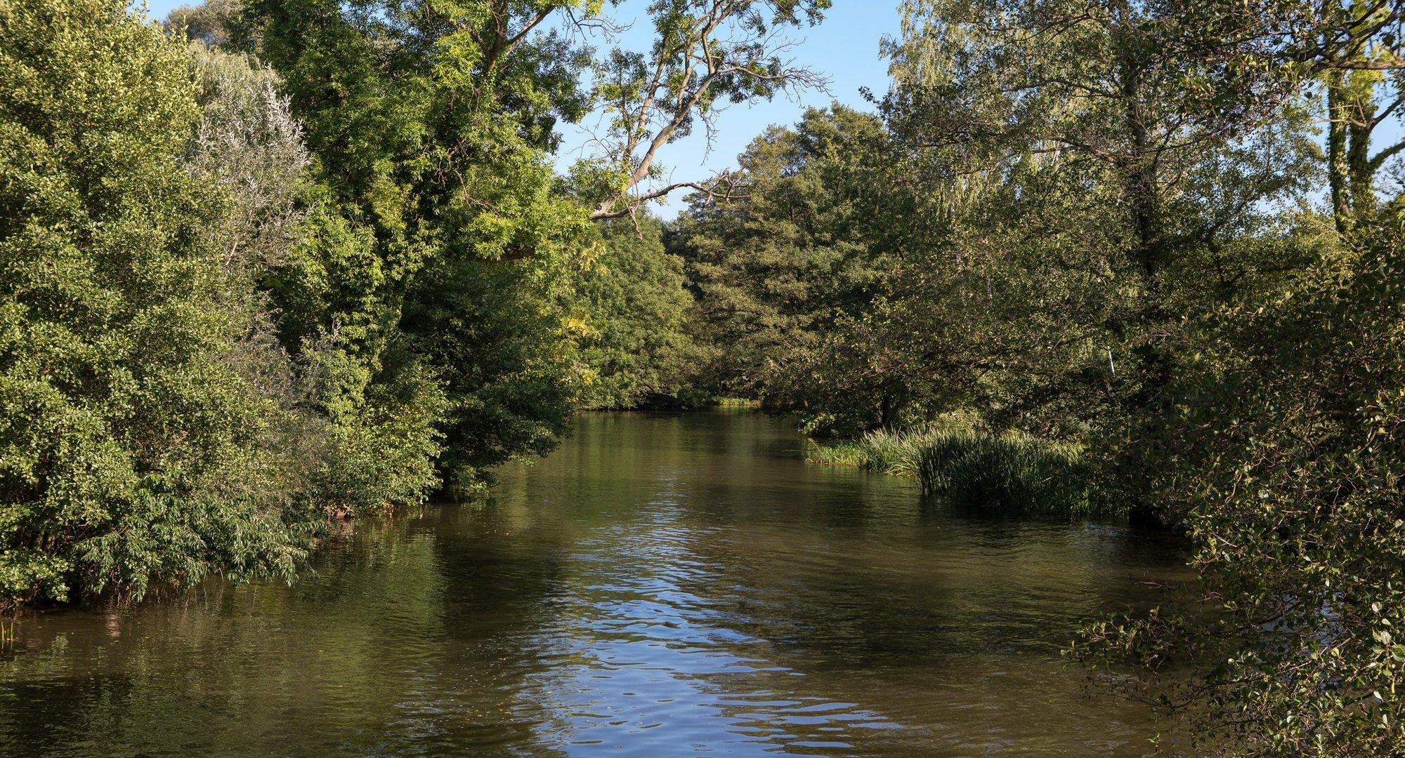 Brandenburg Spreewald Water Nature
