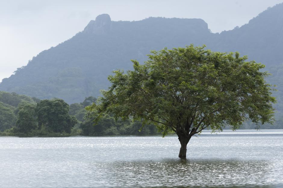 Landscape Tree Water