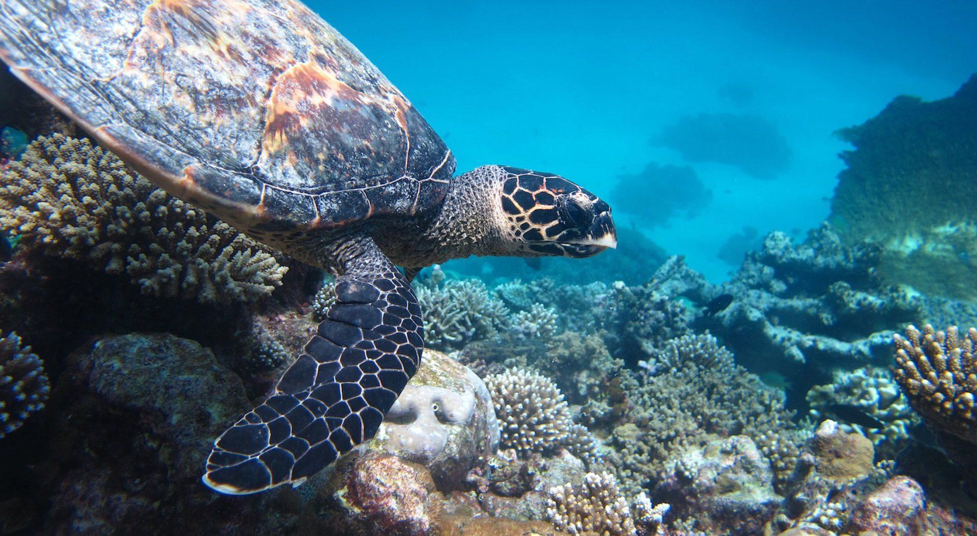Turtle Bodu Hiti Green Projects