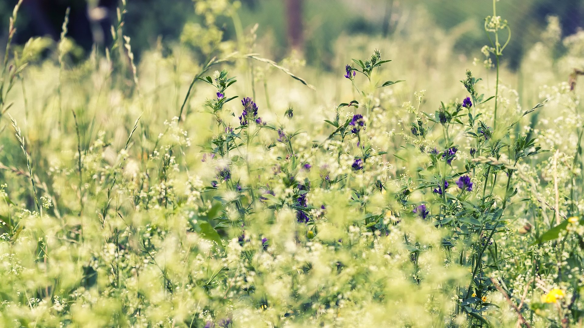 Natur, Wiese, grün