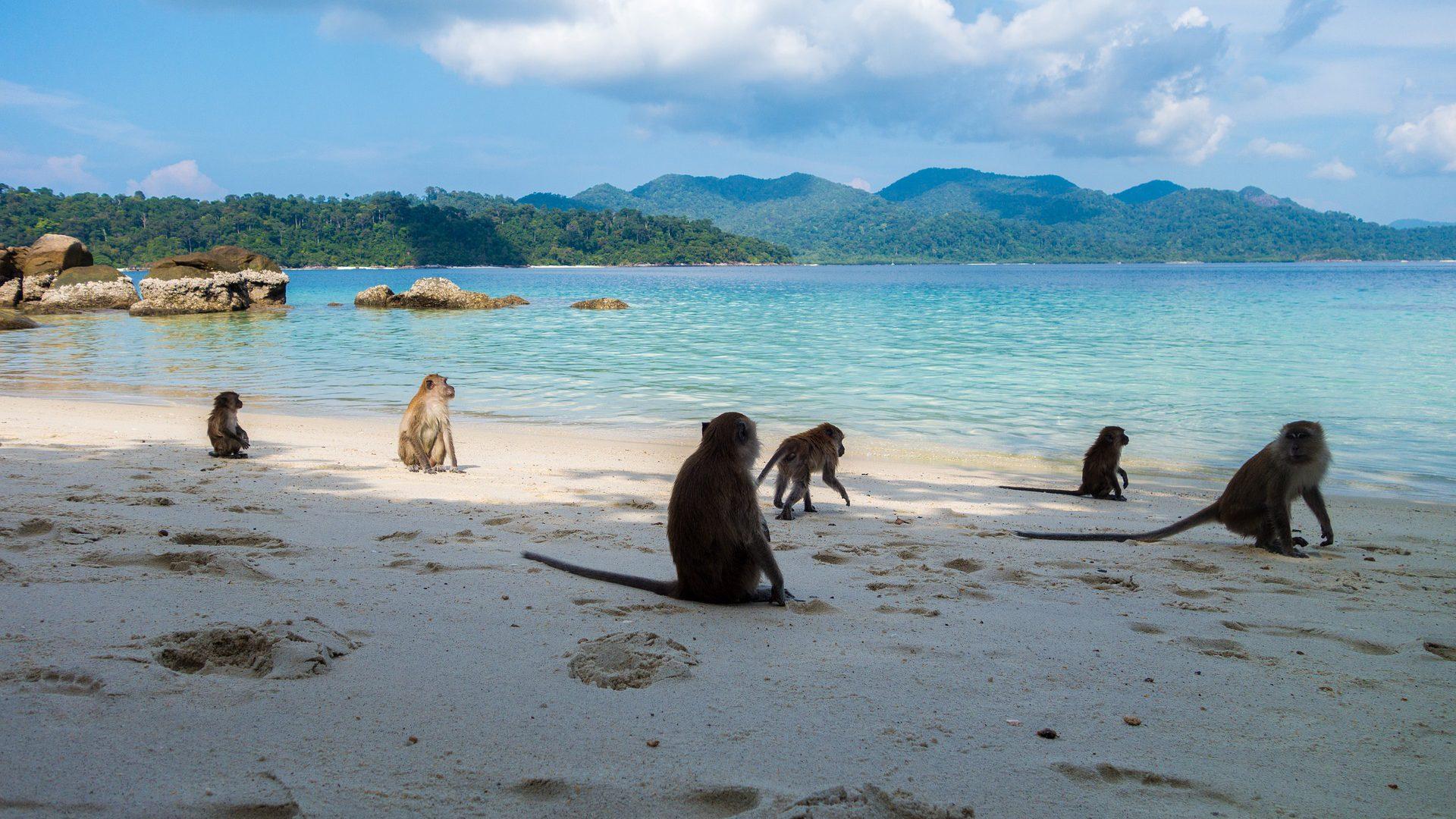 Thailand Strand Affen