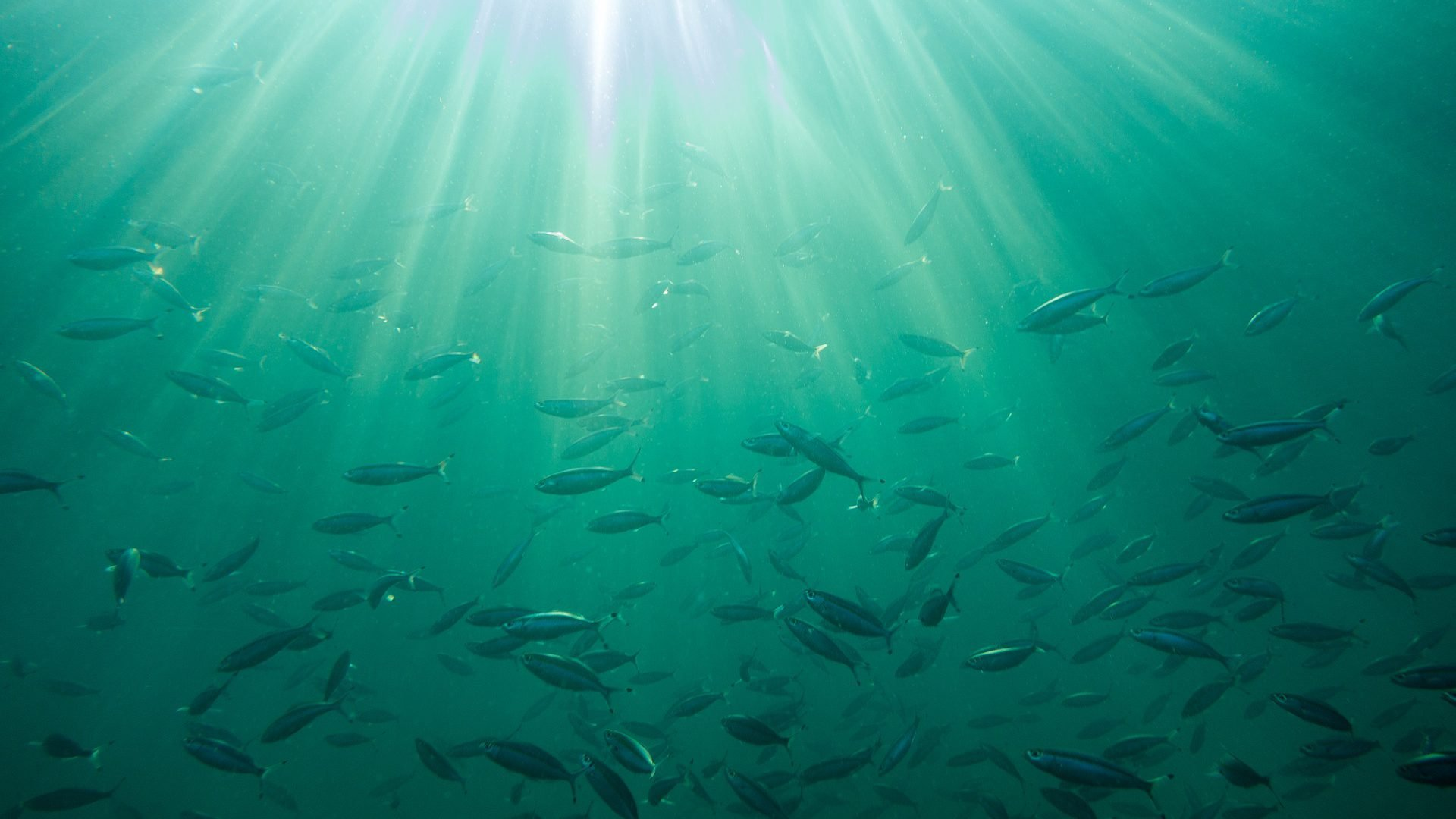 sea underwater fishes