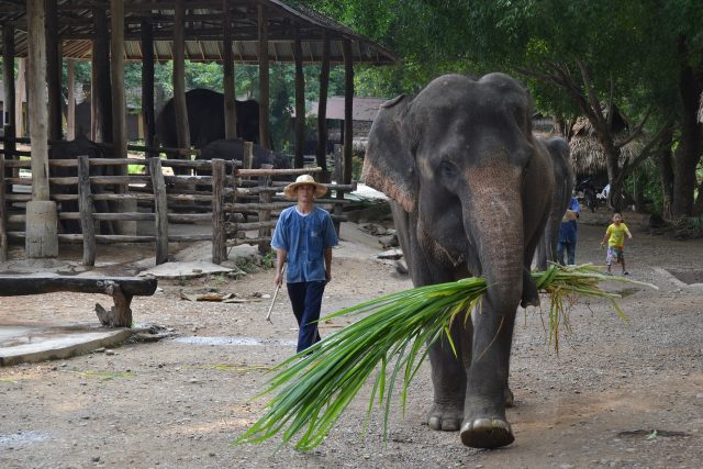 Mahout mit seinem Elefanten