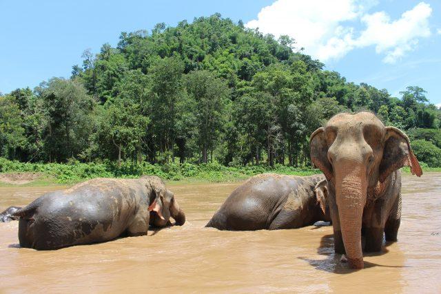 Elefanten im Elephant Nature Park in Chiang Mai
