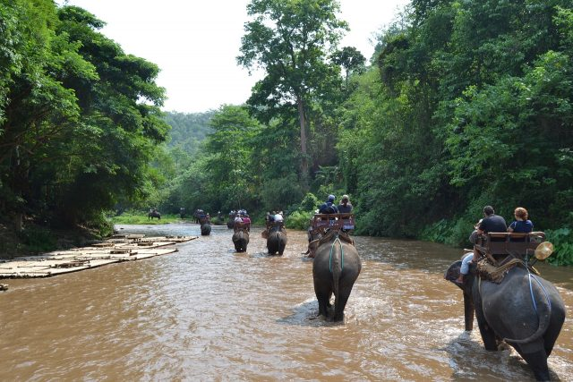 Tourists riding on elephants