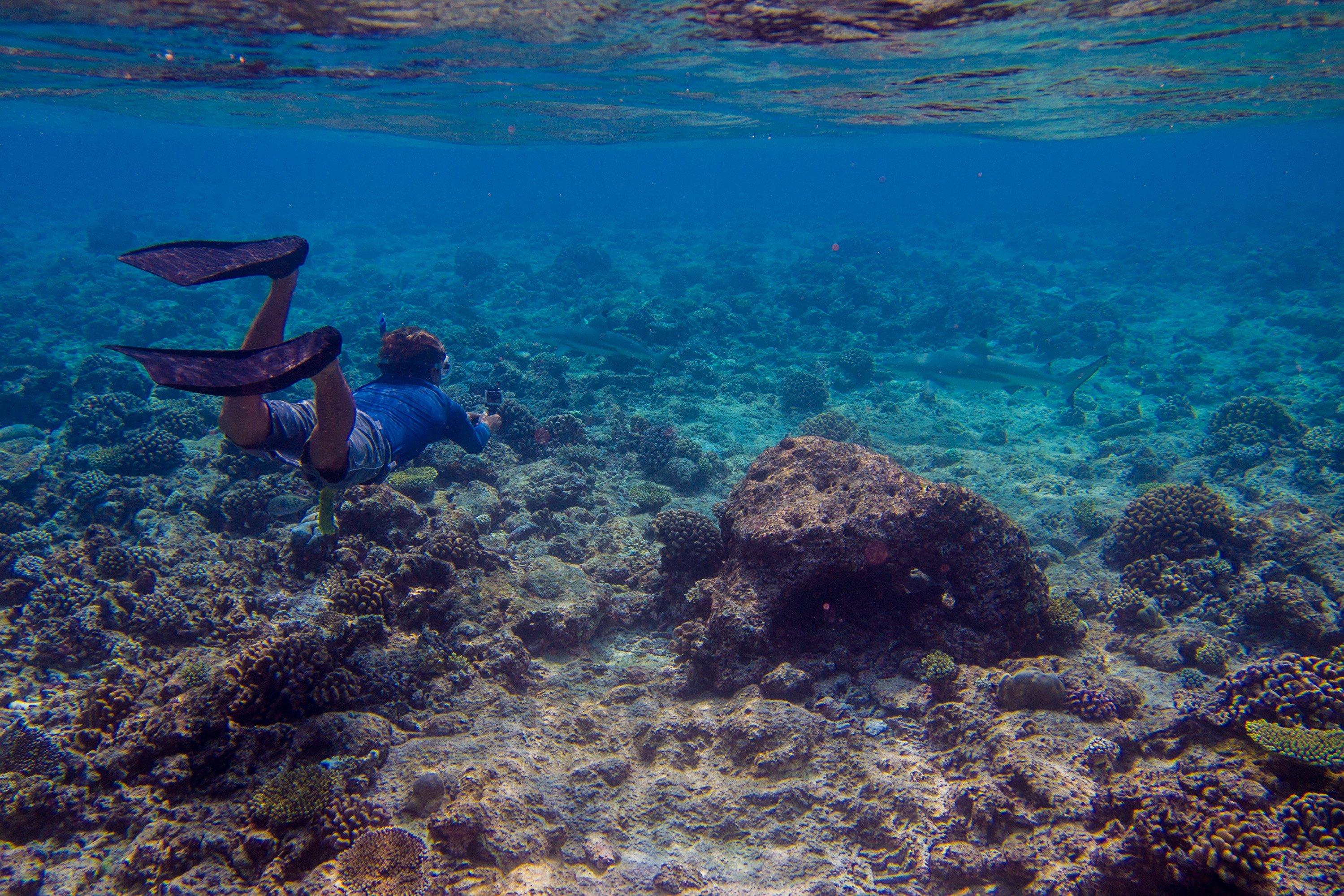 Snorkeler at Gili Lankanfushi