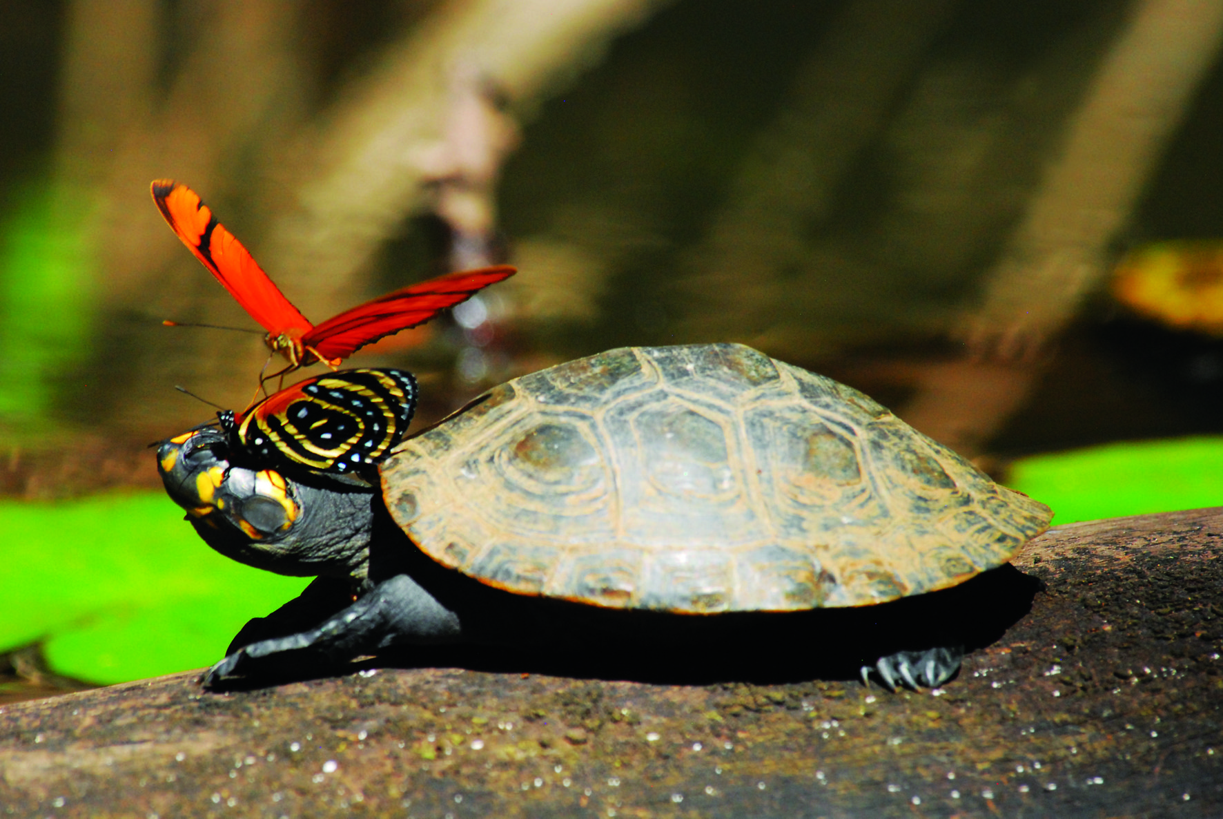 Wildlife, Inkaterra Reserva Amazonica