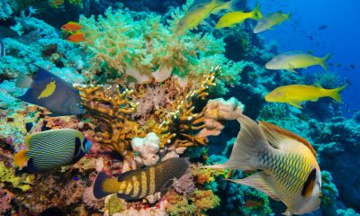 Sustainable Diving Holiday: Tropical Fish and Coral Reef