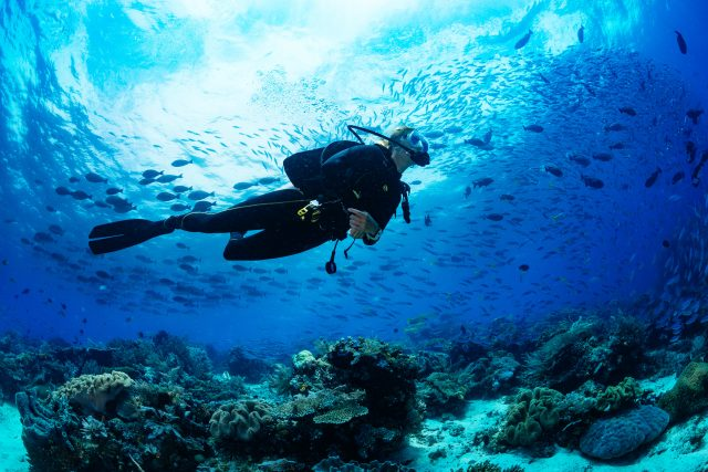 Coral reefs, schools of fish and great experiences when diving sustainably.