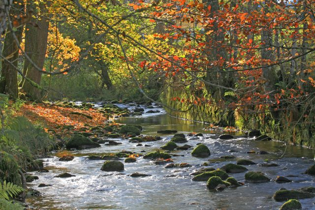 Stream at fall in the Black Forest. © Hotel Lamm