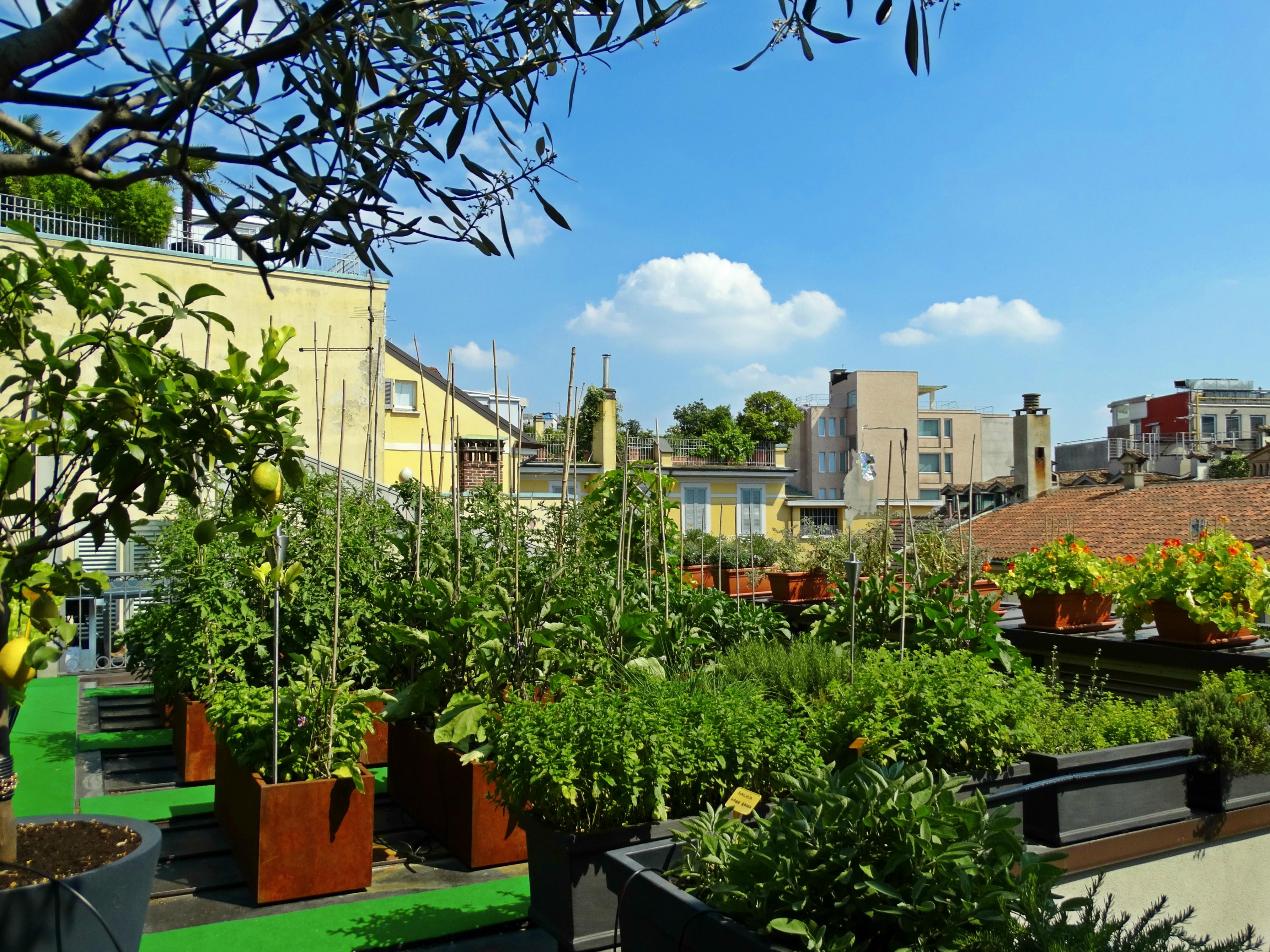 Roof top garden Milano Scala