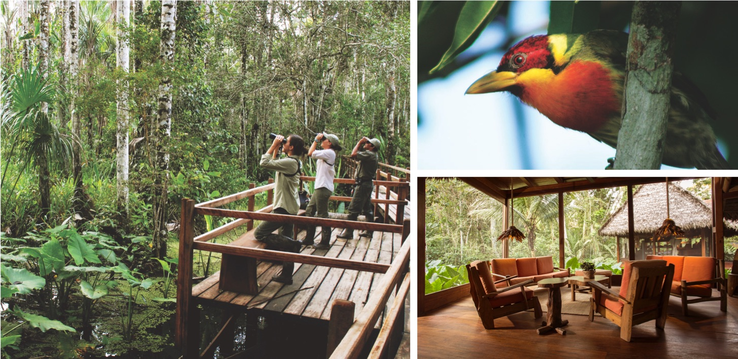 Excursion, fauna, and hotel interior. © Inkaterra Reserva Amazónica