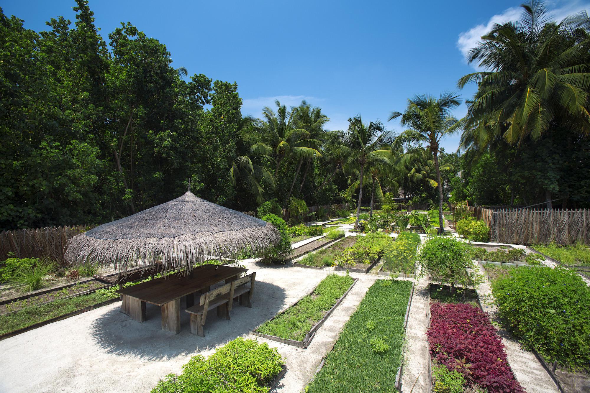 Organic garden at Gili Lankanfushi
