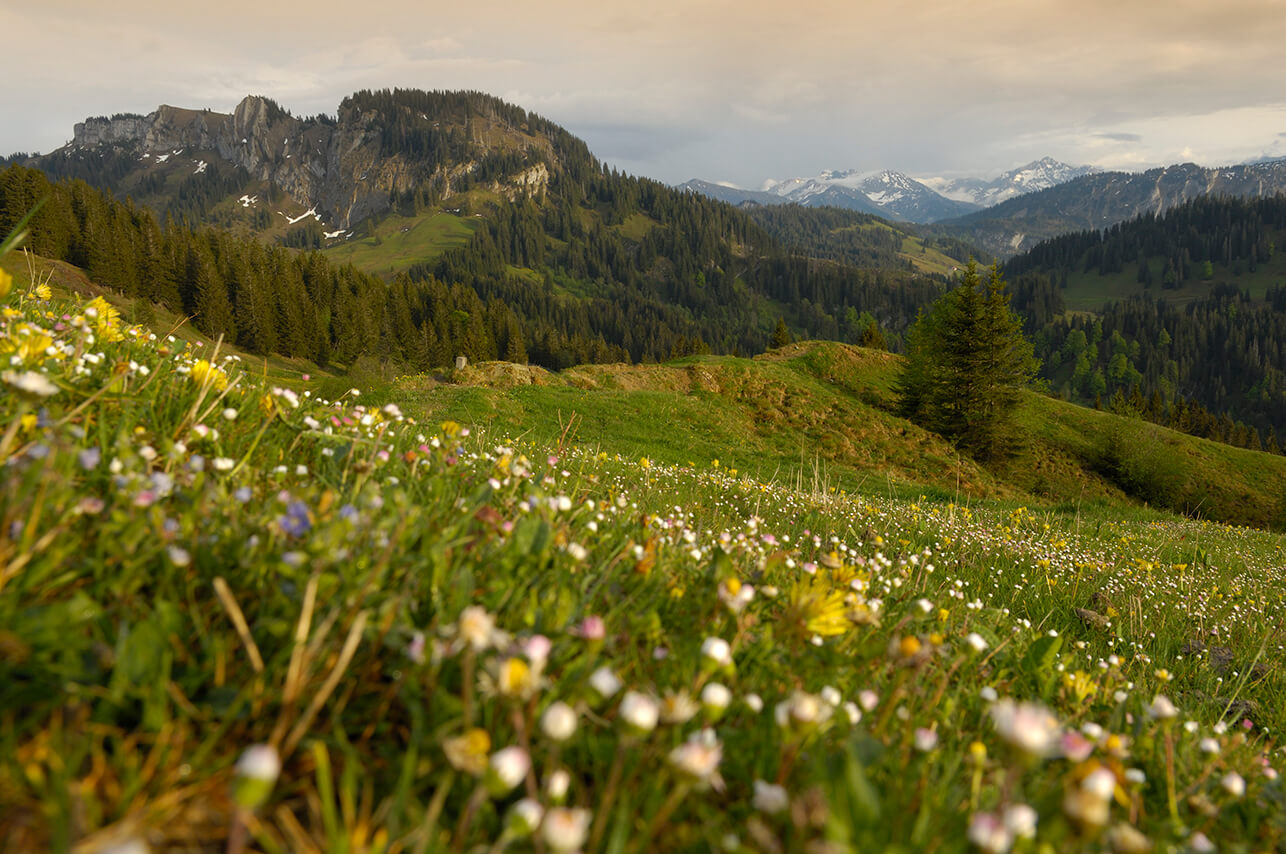 Meadows & lush nature in the Allgau © HUBERTUS Alpin Lodge & Spa